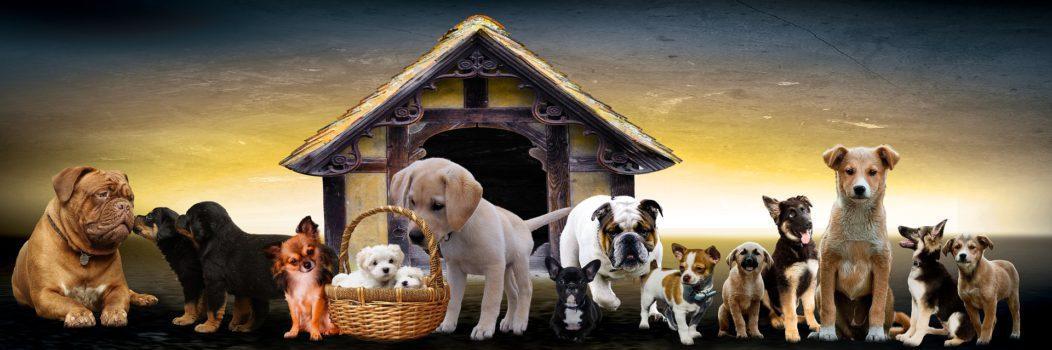 puppies main image
