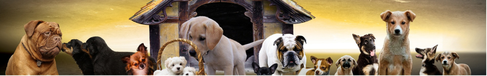 puppies header