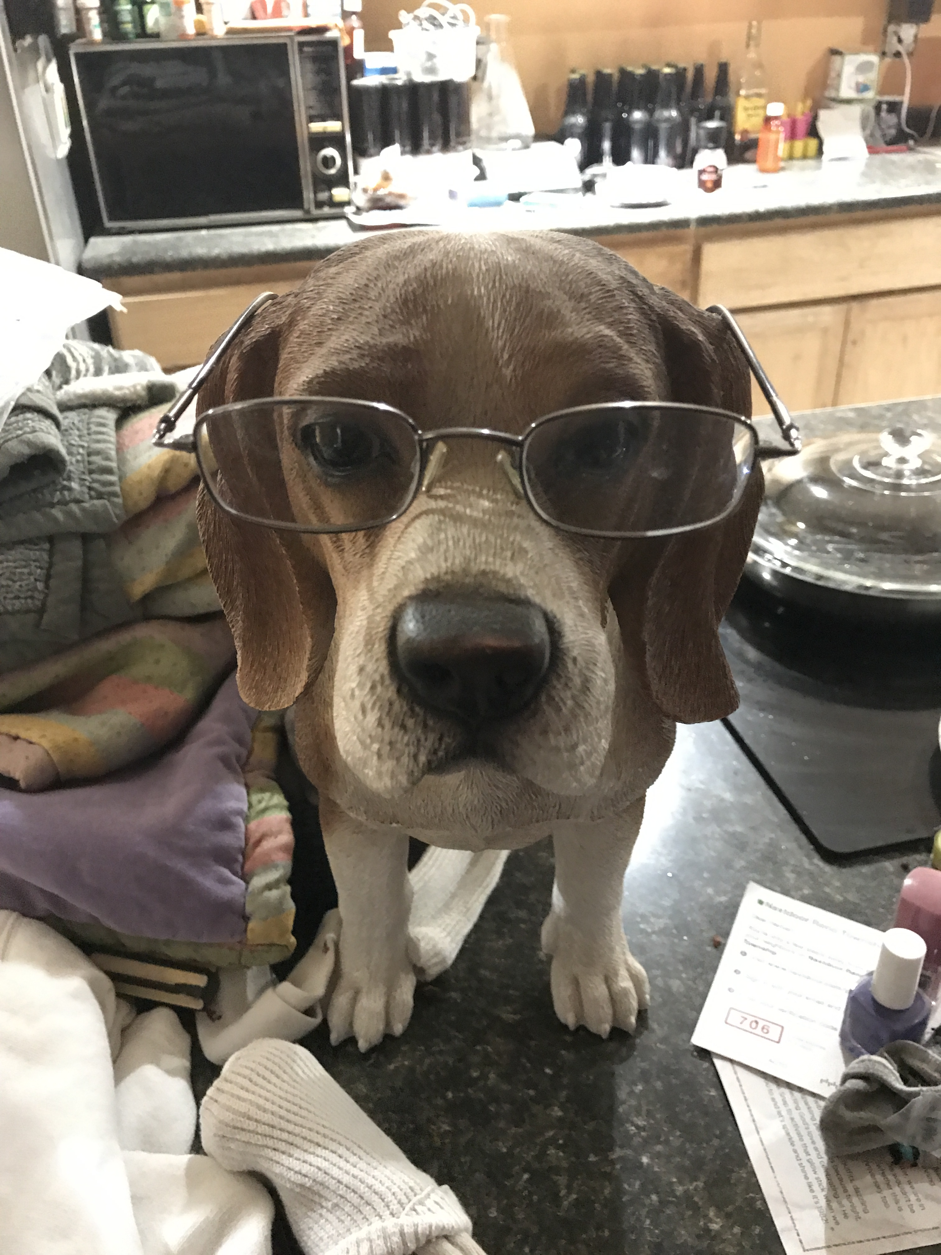 Polly with glasses